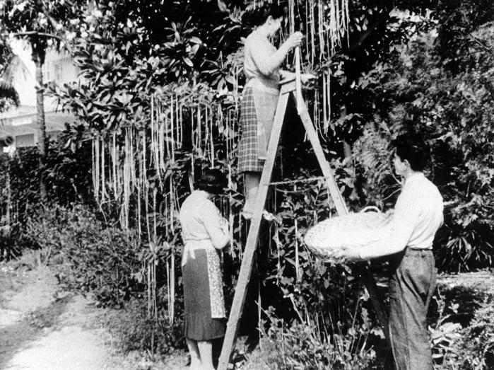 BBC, Panorama (1957)