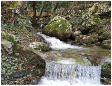 A stream in Falerna